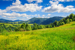 Coniferous forest on a steep mountain slope Royalty Free Stock Photo