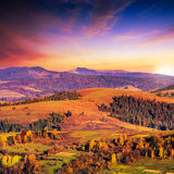 Coniferous forest on a steep mountain slope at sunset Royalty Free Stock Photography