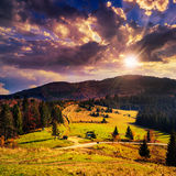 Coniferous forest on a steep mountain slope at sunset Stock Photos