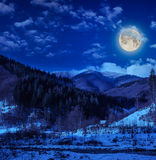 Coniferous forest on a steep mountain slope. On winter night royalty free stock photos
