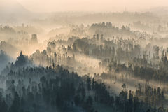 Coniferous Forest with sun beam at Bromo Tengger Semeru National Royalty Free Stock Images