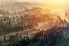 Coniferous Forest with sun beam at Bromo Tengger Semeru National Royalty Free Stock Photo