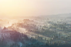 Coniferous Forest with sun beam at Bromo Tengger Semeru National Royalty Free Stock Image