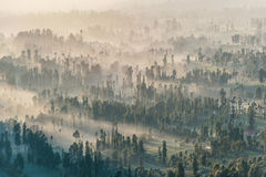 Coniferous Forest with sun beam at Bromo Tengger Semeru National Stock Images