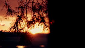Coniferous forest at sunset stock footage