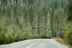 Coniferous forest with timber logs beside desolate road Royalty Free Stock Images