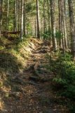 Coniferous forest of trees with a full frame trail stock images
