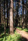 Forest in Trentino Alto Adige. Coniferous forest in Trentino Alto Adige royalty free stock photography
