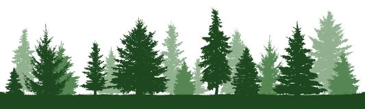 Trees pine, fir, spruce, christmas tree. Isolated. Coniferous forest, vector silhouette. Trees pine, fir, spruce, christmas tree. Isolated trees on a white stock illustration