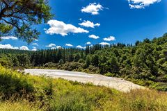 Coniferous forest view in Wai-o-Tapu thermal park in New Zealand stock images