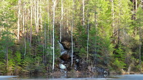 In coniferous forest waterfall. panorama. Video stock video
