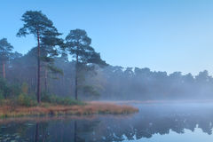 Coniferous forest at wild lake Stock Images