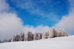 Coniferous forest in winter Royalty Free Stock Photography