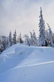 Coniferous forest in winter Stock Images