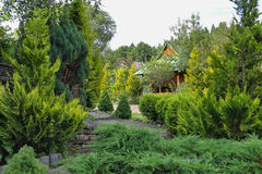 Coniferous garden with arbor. Coniferous garden with decorative arbor Royalty Free Stock Photo