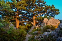 Free Coniferous Green Big Pine Trees And Bushes Grow Among Stones And Cliffs In Warm Orange Light Of Sunset. Crimea Stock Images - 198833184