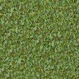 Coniferous Green Surface. Seamless Texture. Royalty Free Stock Photos