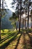 Coniferous pangung леса Стоковые Изображения