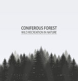 Coniferous pine forest. Camping. Illustration royalty free illustration