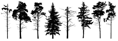 Coniferous set evergreen tree with branches knots sticks in winter. Forest trees silhouette. Isolated vector set. Christmas tree, cedar, fir-tree, pine, pine vector illustration