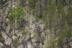 Coniferous taiga Stock Images