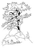 Coniferous tree. The pencil sketch of a coniferous tree. A illustration royalty free illustration