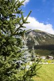 Coniferous tree against mountains Stock Photo