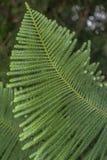 Coniferous tree Stock Photography