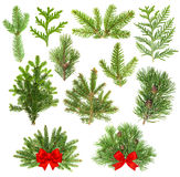 Coniferous tree branches. Christmas decoration red ribbon Royalty Free Stock Photography