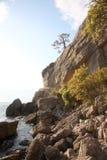 Coniferous tree growing on rocks royalty free stock photos