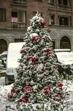 Coniferous tree growing on the street, decorated with Christmas decorations, white balls, red poinsettia and garlands. Spruce tree growing on the street stock photo