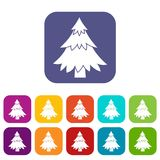 Coniferous tree icons set. Vector illustration in flat style in colors red, blue, green, and other Royalty Free Stock Photo