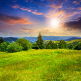 Coniferous tree on a  mountain slope at sunset Royalty Free Stock Photo