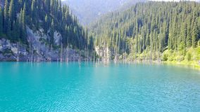 Coniferous tree trunks rise from the depths of a mountain lake with blue water. stock photo