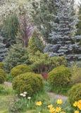 Coniferous trees in the garden: spruce, arborvitae, pine, fir, j. Uniper. Beautiful landscape design Stock Photography
