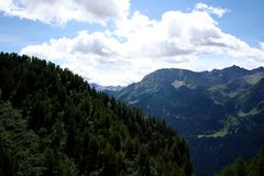 Coniferous trees on mountain. Mountain covered with coniferous trees Stock Photo