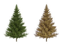 Coniferous Trees Royalty Free Stock Photos