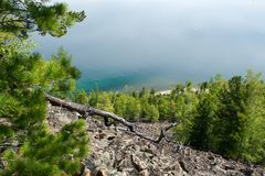 Coniferous trees on shore of lake Stock Photos