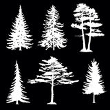 Coniferous trees silhouettes, collection Royalty Free Stock Photography