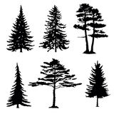 Coniferous trees silhouettes, collection. On white background Stock Image
