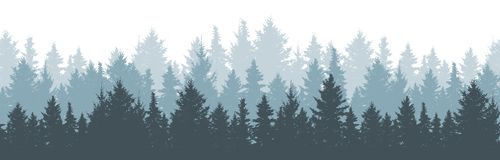 Free Coniferous Winter Forest Background. Nature, Landscape. Pine, Spruce, Christmas Tree. Fog Evergreen Coniferous Trees. Silhouette Royalty Free Stock Image - 167943256