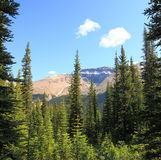 Coniferous wood of Rocky Mountains Royalty Free Stock Images