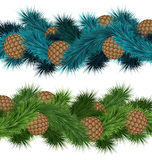 Conifers cones in pine branches Stock Photography