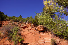 Conifers contrast with red and orange cliffs Stock Photos