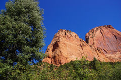 Conifers contrast with red and orange cliffs Royalty Free Stock Photo