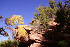Conifers contrast with red and orange cliffs. In narrow canyon along the Taylor Creek trail, Kolob Canyon, Zion National Park, Utah Stock Photos