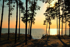 Conifers at the Dnipro river. Stock Photos