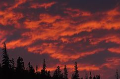 Conifers and fire sky. Ridgeline of conifers sillouetted against purple and blaze sunset cloud colors on a summer night in southwest colorado Royalty Free Stock Photography