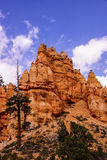 Conifers and Hoodoos Stock Photo