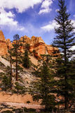 Conifers and Hoodoos Stock Image